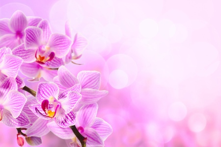 pink orchid on the pink background photo