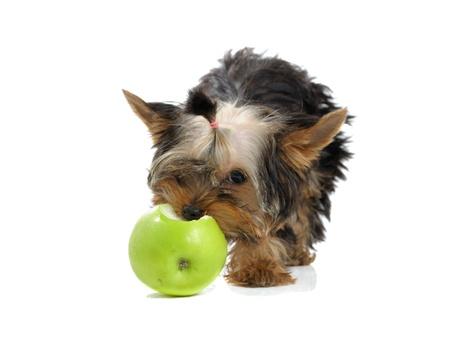 een hond eten een groene appel