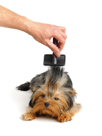 groomer: care for dog hair Stock Photo