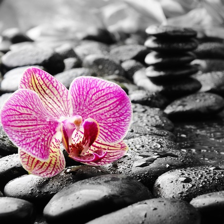 spa stones: zen stones and pink orchid in the water Stock Photo
