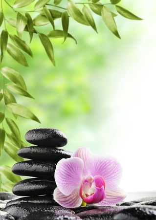 spa concept with zen stones and flower Stock Photo