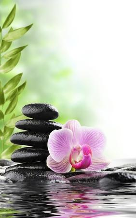steine im wasser: Spa-Konzept mit Zen-Steinen und Blume