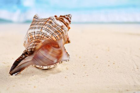 several sea shells on the  sand  background photo