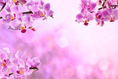 pink beauty orchid on the pink background photo