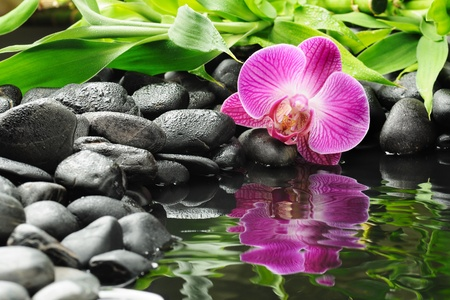 orchid: spa concept with zen stones and orchid
