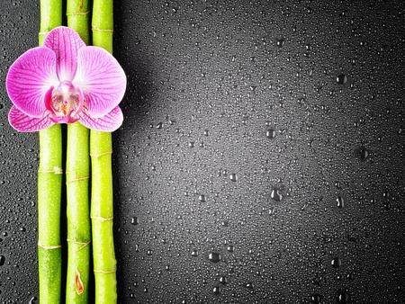 orchid tree: Grove orqu�dea y bamb� Rosa sobre fondo negro
