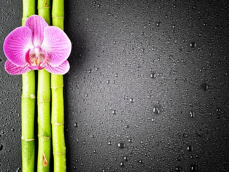 Pink orchid and bamboo grove on the black background photo