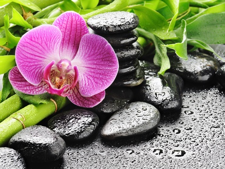 zen spa: spa concept with zen stones and orchid