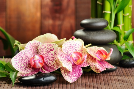 zen basalt stones and orchid on the wood photo