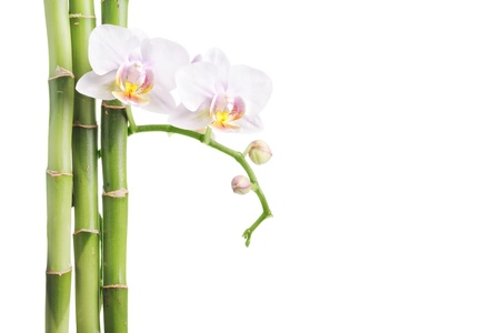 white orchid and bamboo isolated on white photo