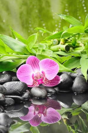 spa concept with zen stones and orchid Stock Photo - 10571027