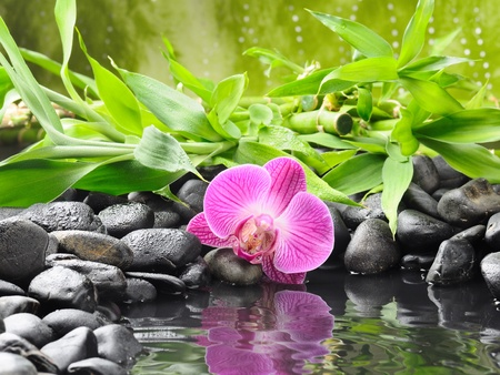 bamboo: spa concept with zen stones and orchid