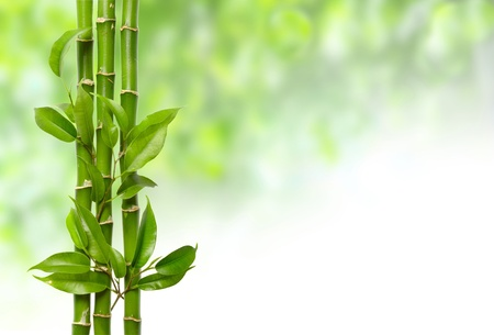 bamboo leaves: white orchid and bamboo isolated on white