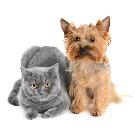 dog cat: cat and dog isolated on white background