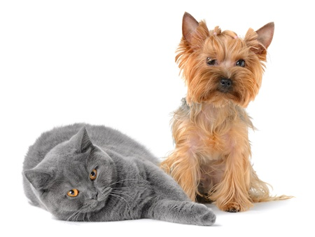 cat and dog isolated on white background Stock Photo - 11157955