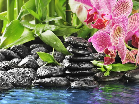 spa concept with zen stones and pink orchid photo