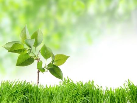 arbol de la vida: Hierba verde y manzanilla en la naturaleza Foto de archivo