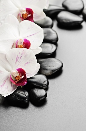spa stones: zen basalt stones and orchid with dew Stock Photo