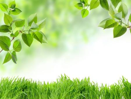 Groen gras en chamomiles in de natuur Stockfoto
