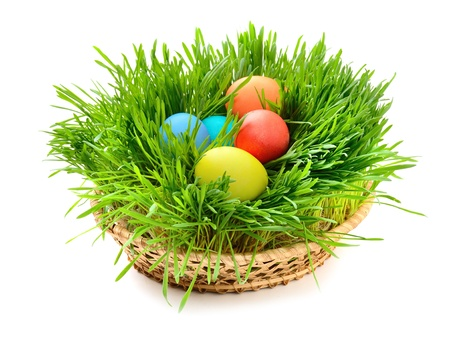 Easter eggs in the grass isolated on white