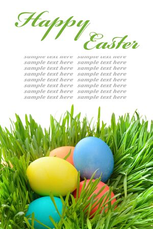 Easter eggs in the grass isolated on white photo