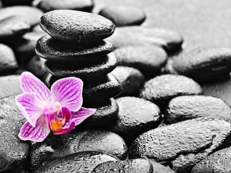 zen basalt stones and orchid with dew photo