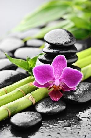 Zen Basaltsteinen und Orchidee mit Tau Standard-Bild