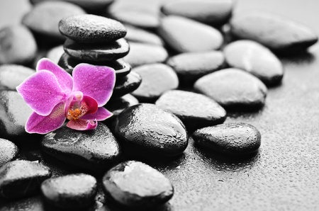 black pebbles: zen basalt stones and orchid with dew Stock Photo