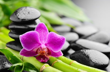 pink orchid: zen basalt stones and orchid with dew Stock Photo
