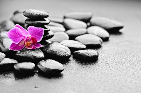 zen basalt stones and orchid with dew Stock Photo - 13308011