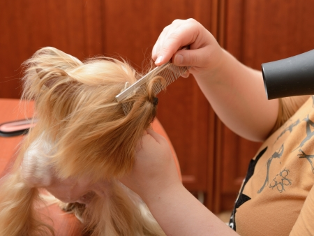 care for dog hair Stock Photo - 13614442