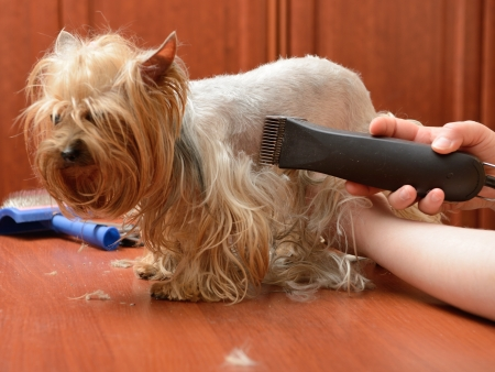 pet grooming: care for dog hair Stock Photo