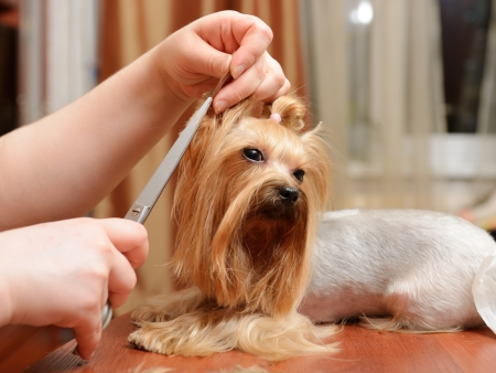 care for dog hair Stock Photo - 13614384