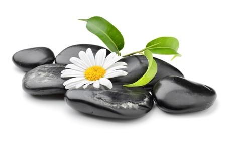massage symbol: zen basalt stones and daisy isolated on white