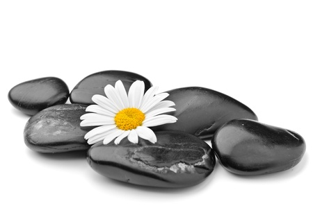 stone therapy: zen basalt stones and daisy isolated on white