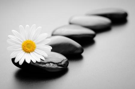 massage symbol: zen basalt stones and daisy with dew Stock Photo