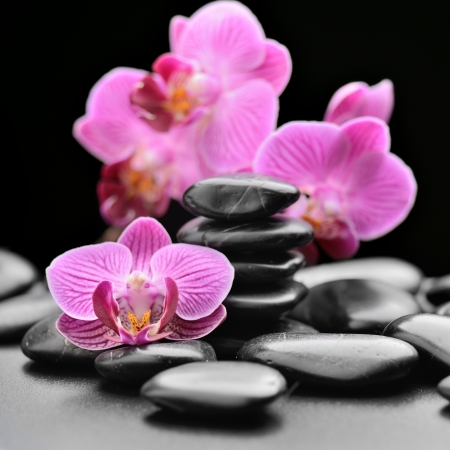 pink orchid: zen basalt stones and orchid Stock Photo