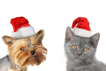cat grooming: Merry Christmas and Happy New Year Stock Photo