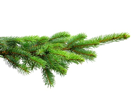 fir tree isolated on white Stock Photo