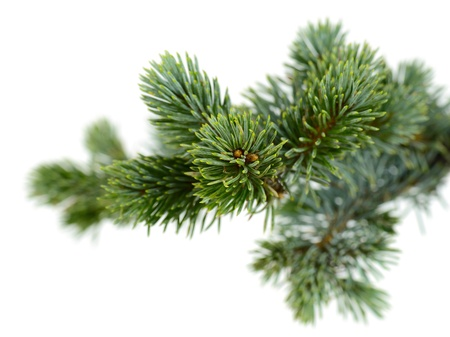 tree decorations: fir tree isolated on white Stock Photo