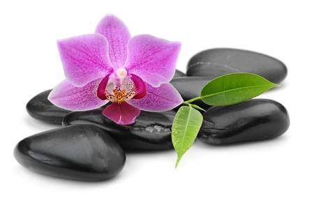 zen piedras de basalto y aislada de la orquídea en blanco