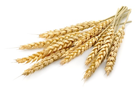 baking ingredients: wheat on the white background