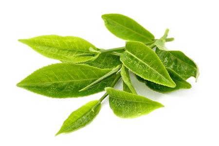 Zielony liść herbaty samodzielnie na białym tle