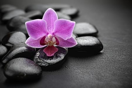 zen basalt stones and orchid Фото со стока