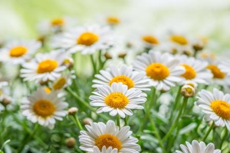 緑の草と自然の中で鎮静