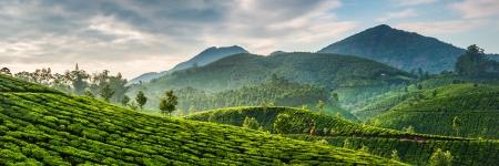 Piantagioni di tè nello stato Kerala, India Archivio Fotografico - 22474237