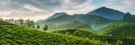 Tea plantations in state Kerala, India Stok Fotoğraf