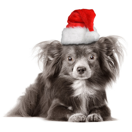 Adorable dog wearing Santas hat  photo