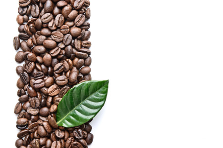 coffee grains and leaves border Stock Photo