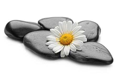 zen basalt stones and daisy isolated on white photo